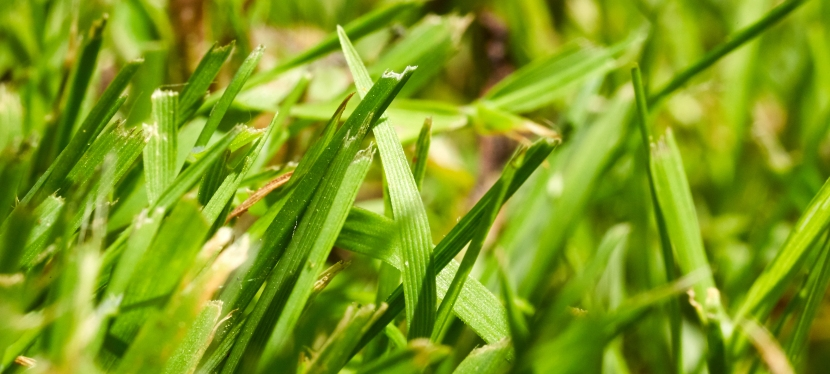 Die Gemeinsamkeit von Spinat undKlimawandel.