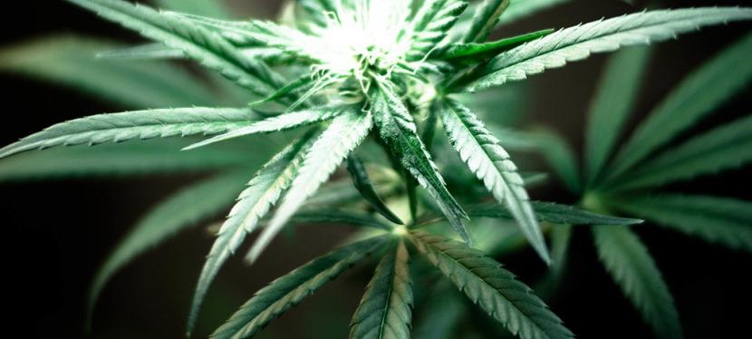 Cannabis Lizenz: Unternehmer stellen Weichen für Ausschreibungsverfahren!