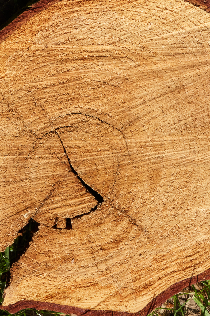Deutschland unter der Pickelhaube. UTR e.V. pflanzt Bäume gegen den CO2-Katastrophismus!